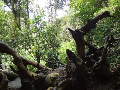 15 Kolumbija DA Valle de Cocora (6)