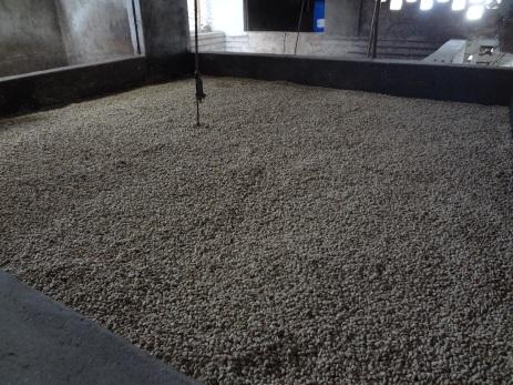 16 Kolumbija kafija (11)