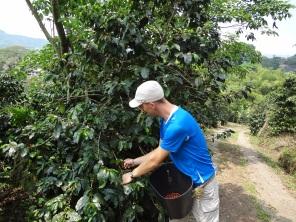 16 Kolumbija kafija (4)